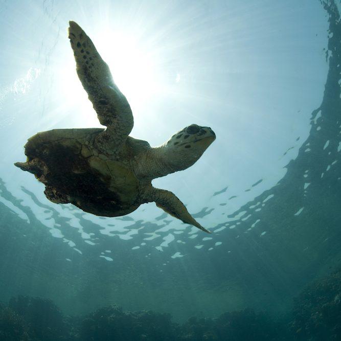 10_Turtle_1000